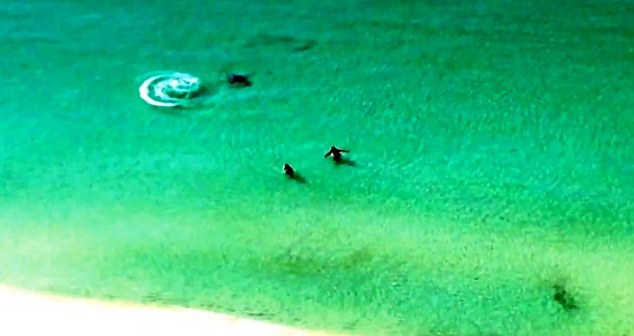 Swimmers race away from hammerhead shark